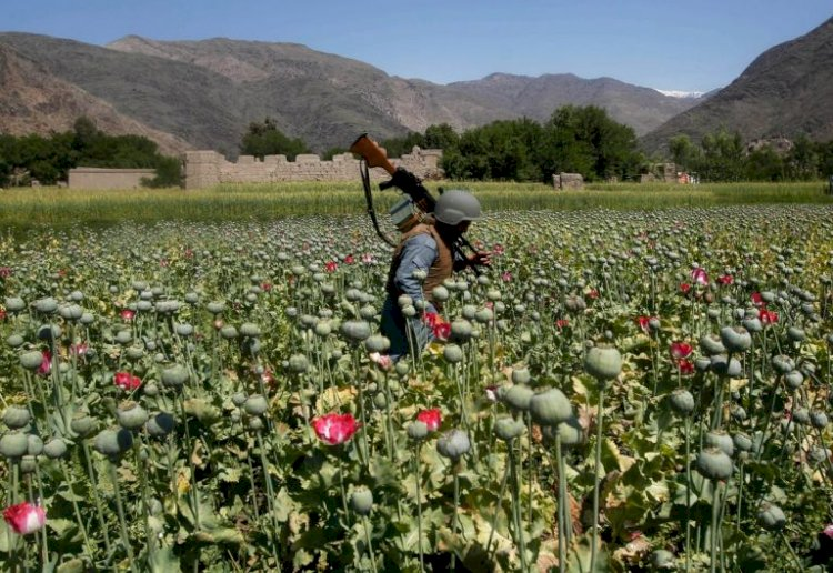 Who Leads the Drugs Trade in Afghanistan?-Omid Jurrat Rastakhiz